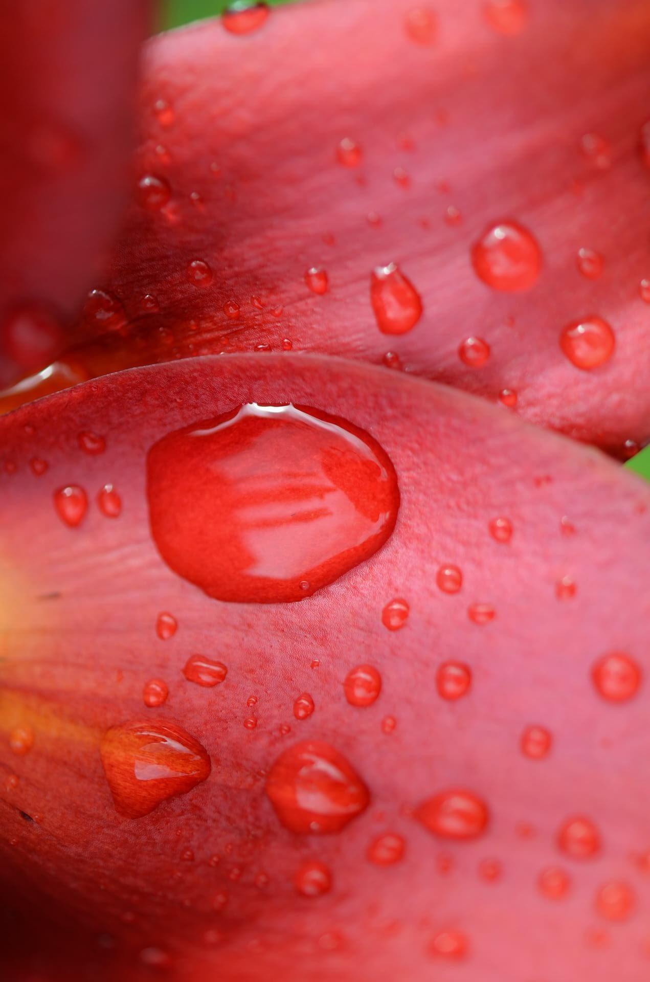 Red Penis Rash: Pictures Symptoms